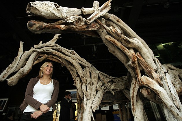 Driftwood Sculpture Horses in London 2008, Oli Scarff, Getty Images