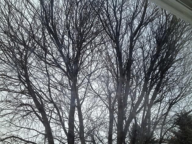 Trees 2014