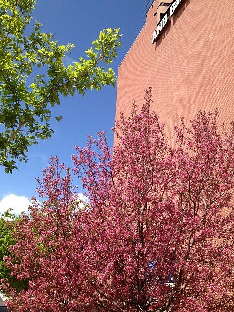 ANB Bank Blossoms