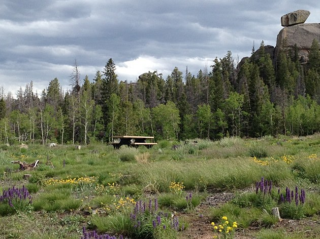 Vedauwoo Picnic table Flowers