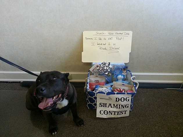 Mutt Shaming Contest Winner Jewels with Prize Basket