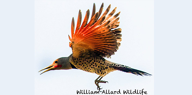 William Allard Wildlife